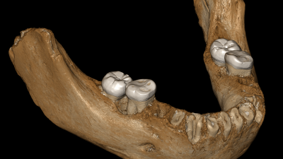virtual-reconstruction-of-the-xiahe-mandible