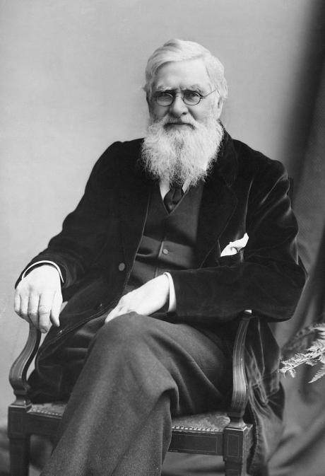 Alfred Russel Wallac evolutionens anden fader